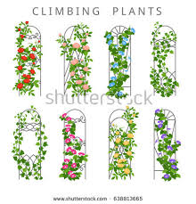 Growing Climbing Plants  Where To Plant Climbers  HGTVClimbing Plants