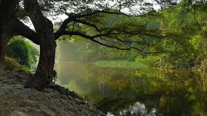 tree by stream hd desktop wallpaper