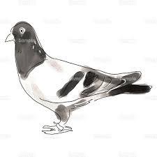 鳥鳩ハトのイラスト0400132 クリエーターズスクウェア