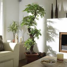 decorative plants for office. amazoncom luxury japanese fruticosa tree handmade artificial plant replica made with real bark and synthetic leaves in a brown plastic pot decorative plants for office