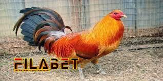 Webmasters, you can add your site in. Sabung Ayam Peru Sabung Ayam Peru Harga Ayam Peru Terbaru April 2021 Bulan Ini Nyonyor Com 2021 S128 Merupakan Permainan Sabung Ayam Online Yang Dahulunya Hanya Dapat Dilihat Dalam Arena Adu Ayam