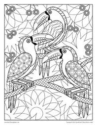 Bird Coloring Pages From Adult Coloring Books