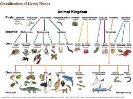 Animal Classification Chart Invertebrates 11 Scientific Flow Chart Of Vertebrates