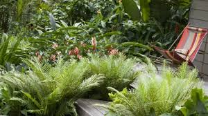 Image result for ​​Garden Plants garden