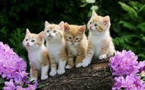 47+] Cute Kitten Wallpapers for Desktop ...