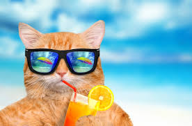 Summer Cats And Dogs Wallpapers - Wallpaper Cave
