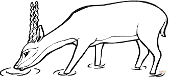 Small Picture Oryx Antelope coloring page Free Printable Coloring Pages