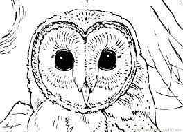 Small Picture Owl Coloring Pictures For Adults Pages Free Printable Kids