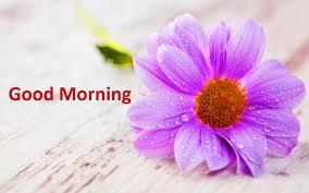 4k good morning wallpaper full hd