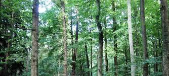 Buche natur ist ebenfalls recht preiswert. Treppen Aus Holzarten Wie Eiche Buche Ahorn Carolina Pine Und Bambus