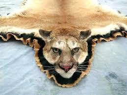 fake tiger rug lion rug photo 3 of 7 mountain mount head taxidermy for fake tiger rug fake tiger rug with head fake tiger skin