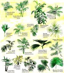 Palm Tree Chart Grow Tropical Palms At Home Organic Gardening Palm Trees