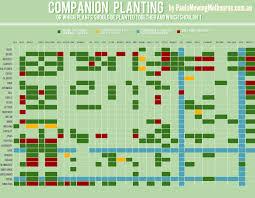 Companion Planting Infographic Infographic Expo