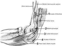 enters forearm between 2 heads humeral and ulnar heads of fcu