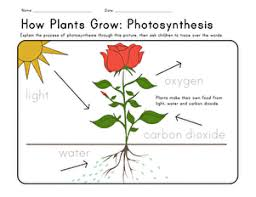 In these life science worksheets, students identify what plants need in order to grow. How Plants Grow Worksheet Education Com