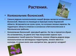 Презентация Проект Животные и растения Кировской области   Проект Животные и растения Кировской области которые занесены в Красную книгу России