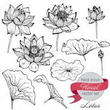 векторный набор рисованной Lotus цветы и листья векторное