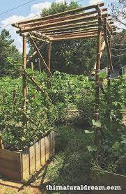 DIY bamboo garden arbor. Bamboo construction can be as simple or complex as  you want