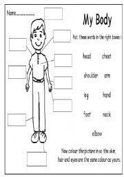 The Body Esl Worksheet By Peeners