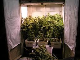closet grow room setup