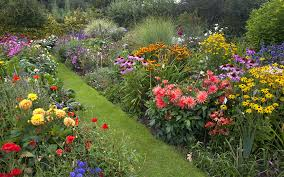 Small Picture How to Create a Herbaceous Border on a Budget Herbaceous border