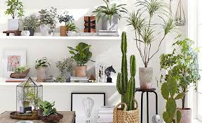 Decorating with Plants: 5 Indoor Hanging Planter Ideas