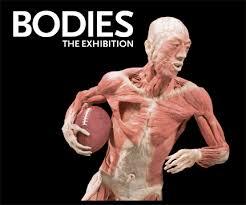 תוצאת תמונה עבור תערוכת גופות