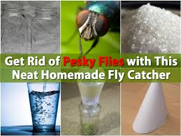 Get Rid of Pesky Flies with This Neat Homemade Fly Catcher DIY
