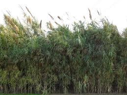 tall grass texture. Tall Grass Texture 7