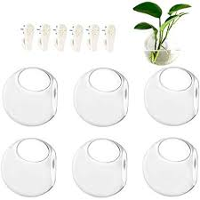 details about 6 pack wall hanging planters glass terrariums round air plants containers globe