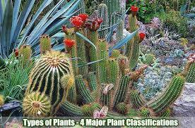 Venn Diagram Of Vascular And Nonvascular Plants Classification Of Plants 4 Major Types Of Plants Biology