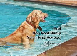 best dog pool ramp 7 reviews be safe