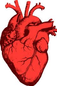 Výsledok vyhľadávania obrázkov pre dopyt heart