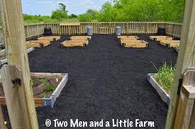 raised bed garden mulched