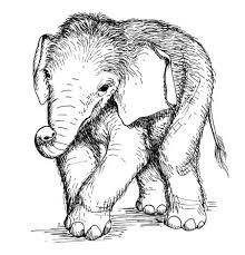 Asian Elephant Coloring Pages Getcoloringpagescom