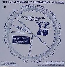 Details About Cattle Gestation Calendar Calculate Birth Breeding