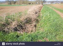 drainage ditch drainage ditch overgrown and clogged by vegetation sutton suffolk