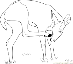 Small Picture Deer Coloring Pages Printable Coloring Pages of Deers