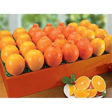 honeybells navel oranges citrus gift bo hale groves gourmetgiftbo