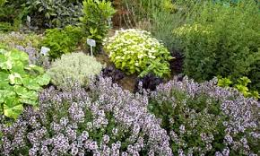 Small Picture Garden Design Garden Design with Herb gardens to visit Telegraph