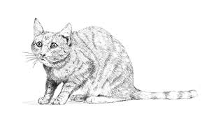 Cat Body Language Chart Understanding Cat Body Language Behaviour Purina