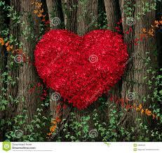 Image result for natural images for valentines