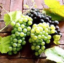 50 mixed g seeds vitis vinifera delicious fresh fruit bulk garden seeds s019
