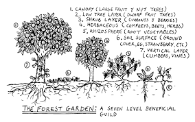 Garden Design Courses Simple Integrated Forest Gardening Design Course Charm City Farms
