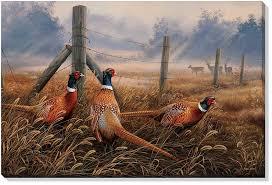meadow mist pheasants 24x36 canvas wrap artist rosemary millette