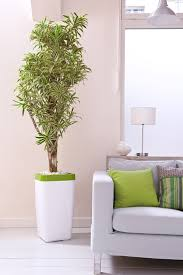 feng shui plants for office. Feng Shui Plants Improve Indoor Air And Create A Comfortable Atmosphere At Home In The Office How Can You Positive Flow Of Energy Your Home? For