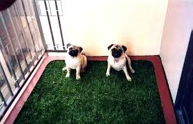 best of patio dog potty and pet trainer outdoor area for elegant or fake grass how apartment dog potty area for patio