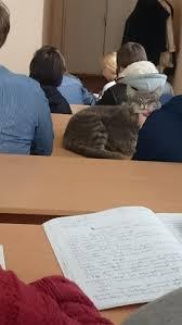Так проходят пары ветеринаров Так проходят пары ветеринаров ветеринария Ветеринар пары ПГСХА кот длиннопост