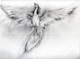 Pictures Of Phoenix Drawing In Pencil Kidskunst Info