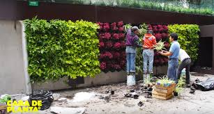 Small Picture Vertical Garden India complete guide Tools and Much More My